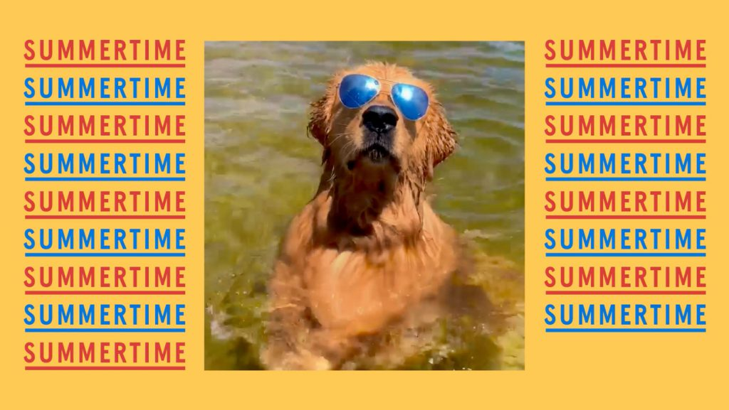 A dog wearing sunglasses enjoys being in the water, flanked by the word summertime, in a still from Bushs Beans' Beautiful Summer ad